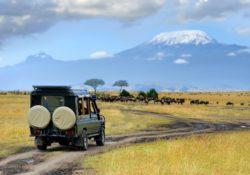 Organiser un séjour safari
